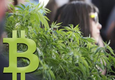 Le Cannabis bientôt légalisé grâce aux Bitcoins ?
